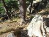 Sur la variante alpine du GR20 à Bocca di l'Acellu : le versant Nord