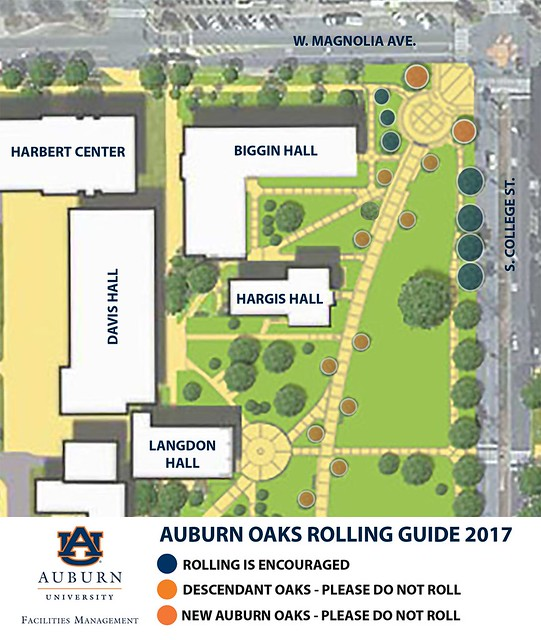 An image showing the 2017 plan for rolling Toomer's Corner