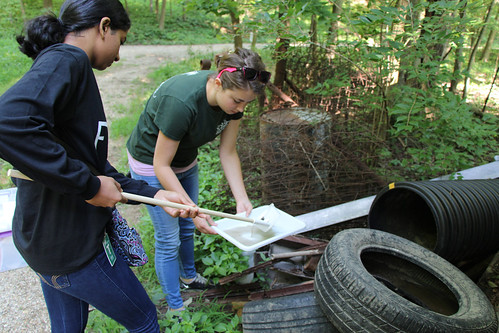 Student volunteer Yashodha Narayanan and ARS research technician Molly K. Schumacher collecting mosquito larvae