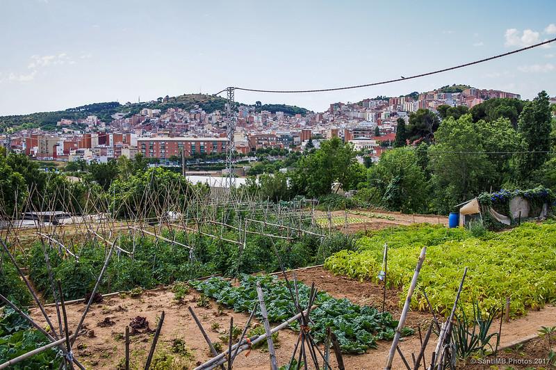 El huerto de Marcel·lí, en el barrio de Horta