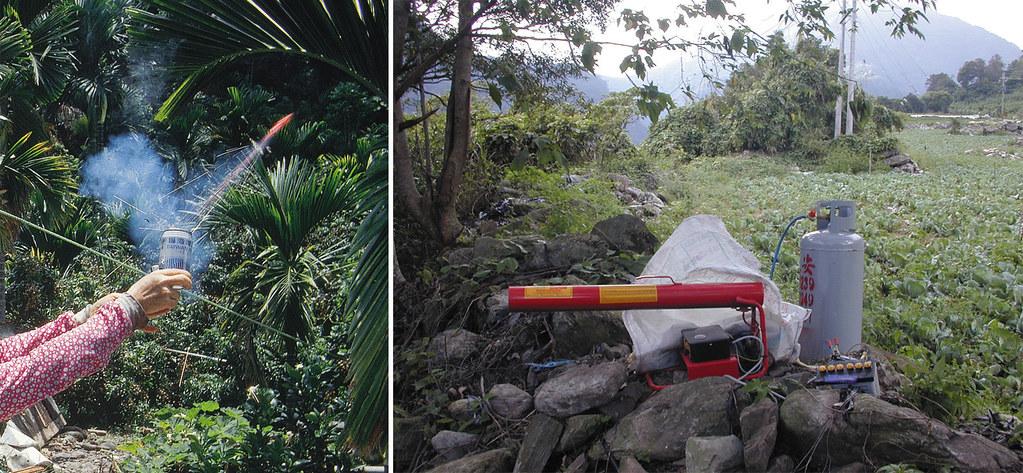以噪音防止獼猴靠近農園是防治猴害的方法之一,燃放鞭炮、瓦斯音爆器都是常見的方法。張仕緯提供。