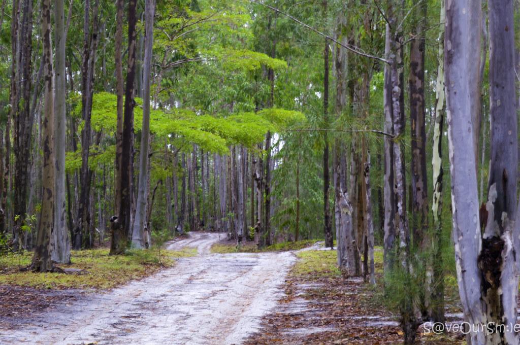 MAndena Conservation Zone。Hery Zo Rakotondramanana(CC BY-SA 2.0)