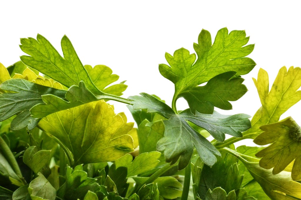 healthly parsley pztryk flickr