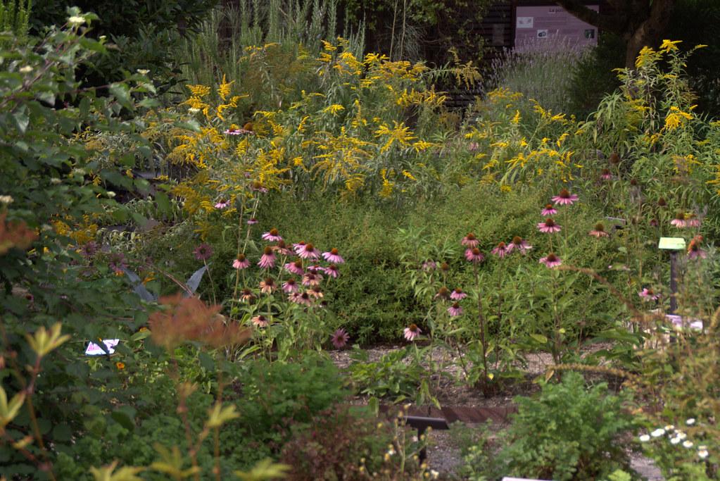 En el jard n bot nico atl ntico de gij n jardines for Jardin botanico el ejido