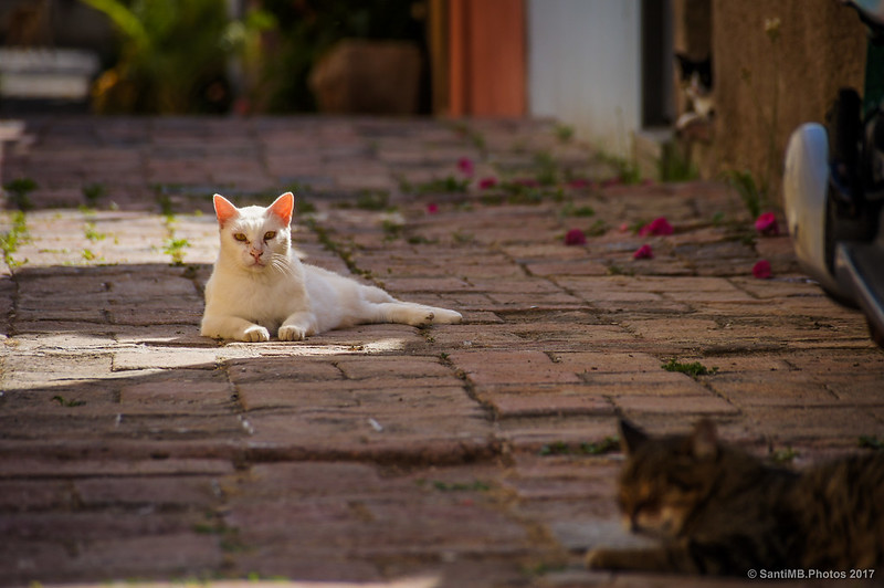 Gatos en la calle de las lavanderas de Horta