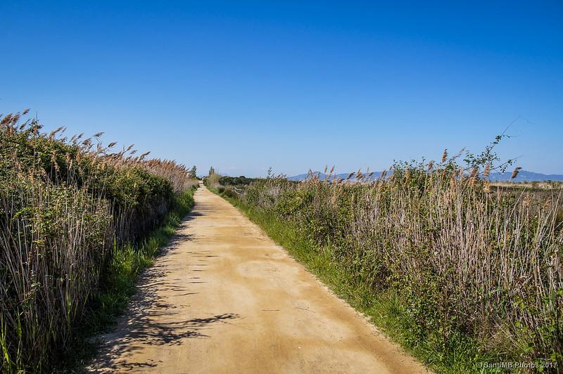 Camino en el Delta del Llobregat