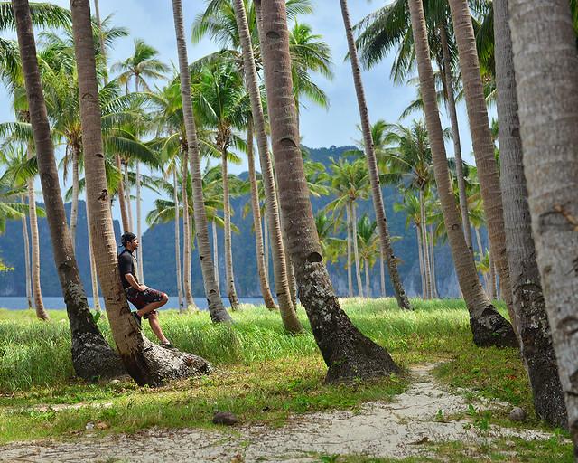 En un precioso bosque de palmeras de Filipinas al atardecer