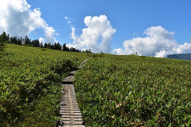 大日平の草原と木道と青空