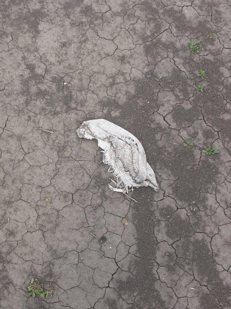 Трещины на дороге после сильного солнца