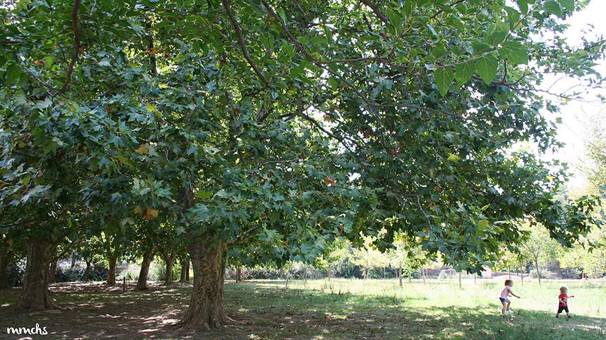 árbol en el nacimiento del río Tuéjar