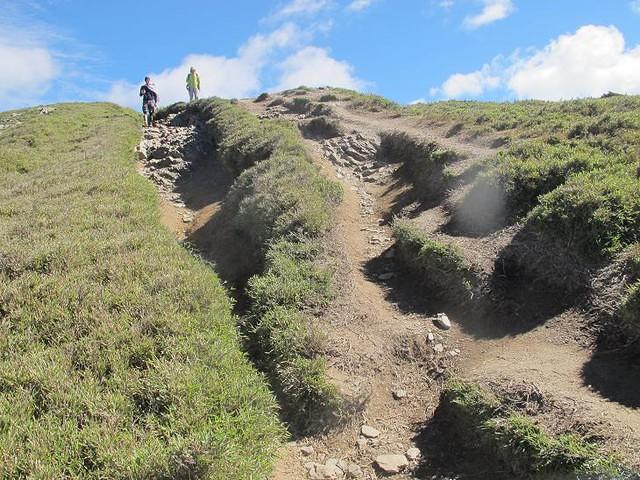 合歡北峰步道1K+300 50m的沖蝕溝,以及山友們覺得不好行走,便從旁側箭竹叢走出新路徑,導致箭竹叢枯死,土壤也逐漸流失。攝影:陳理德