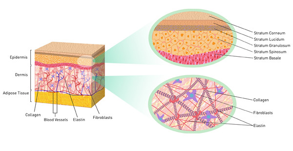 Cách bổ sung Collagen giúp giữ lại vẻ thanh xuân cho làn da và mái tóc