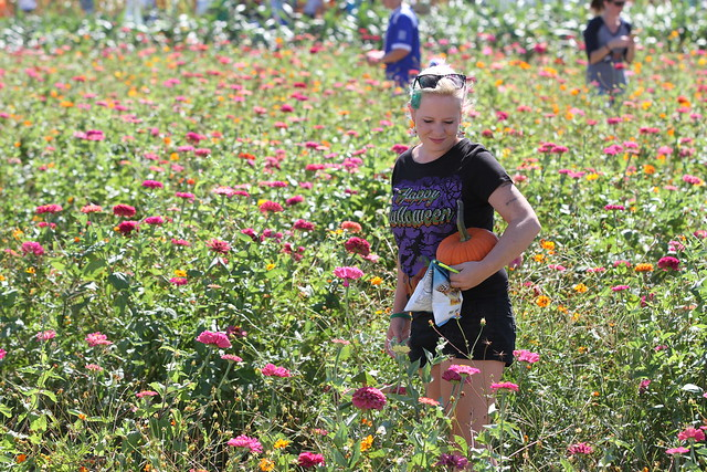 A woman carrying a pumpkin walks through a field of flowers.