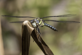 Migrant Hawker | by PINNACLE PHOTO
