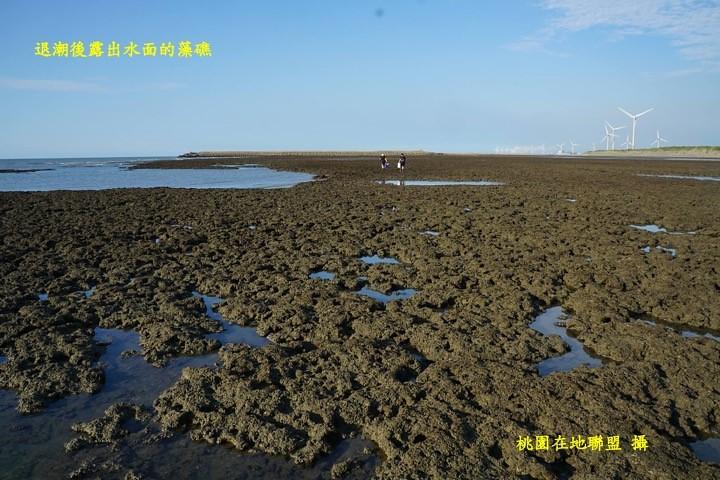 退潮後露出水面的藻礁(桃園在地聯盟攝)
