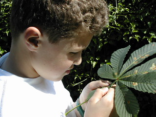 24 esame dal vivo ad occhio nudo delle foglie