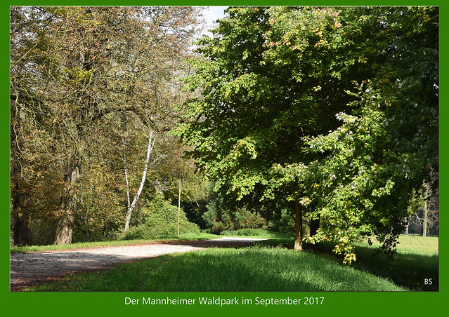 Der Mannheimer Waldpark am Rhein im September ... Brigitte Stolle 2017