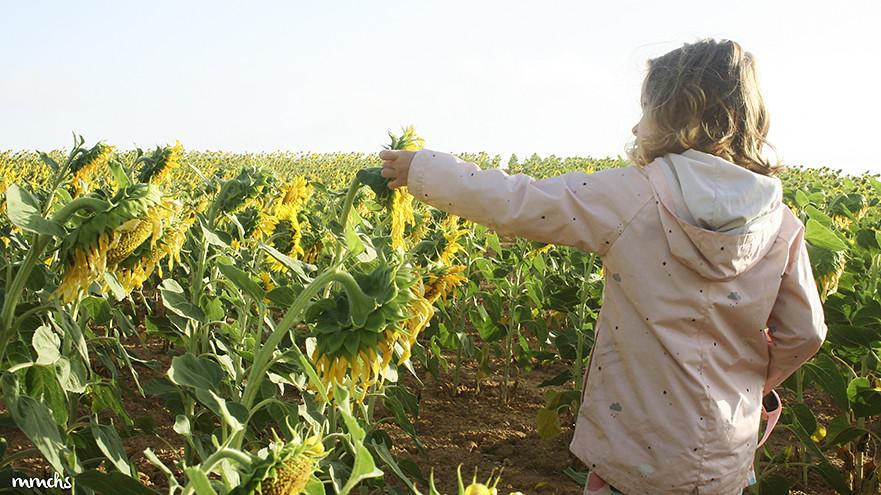 niña en campo de girasoles