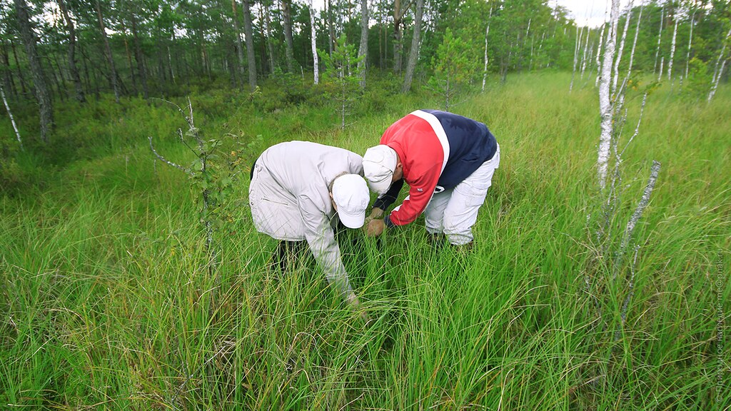 Chemistry meets biology. Cooperation between scientists on raised bog Bolshoe