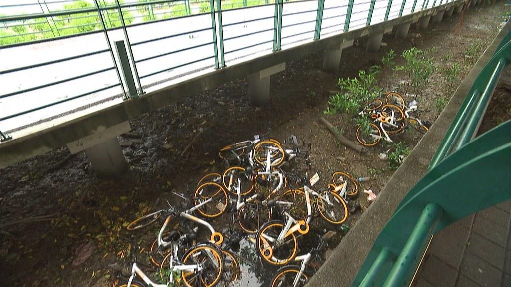 920-3-31 台北市北投關渡宮的自行車道旁和一些地方,都有oBike被惡意丟棄事件發生。