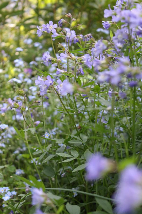 ellwanger gardens