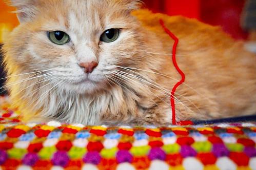 Blondie, gata Angora vainilla tímida y dulce esterilizada, nacida en Abril´13, en adopción. Valencia. ADOPTADA. 37277756605_b55327bf79