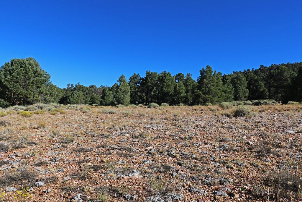 pebble plains habitat near big bear lake in the san bernar