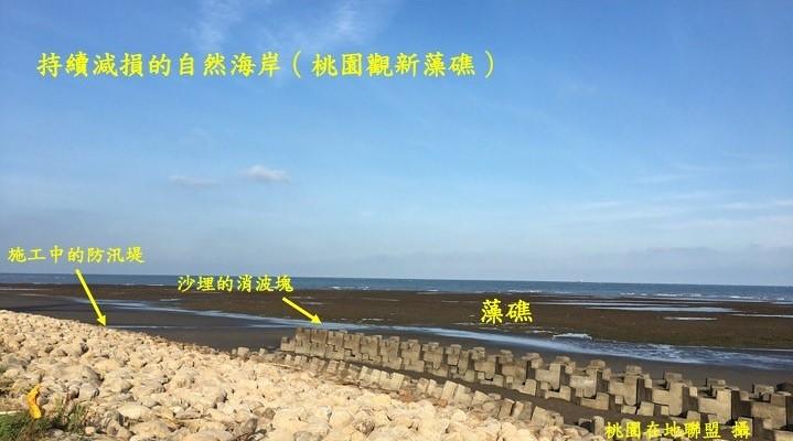 持續減損的自然海岸(桃園觀新藻礁)