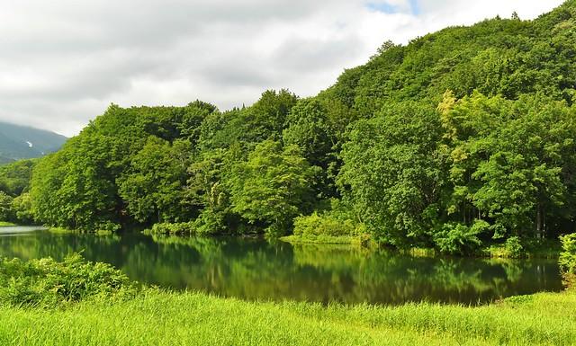温泉裏の池