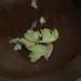 thumb_IMG_6698_1024
