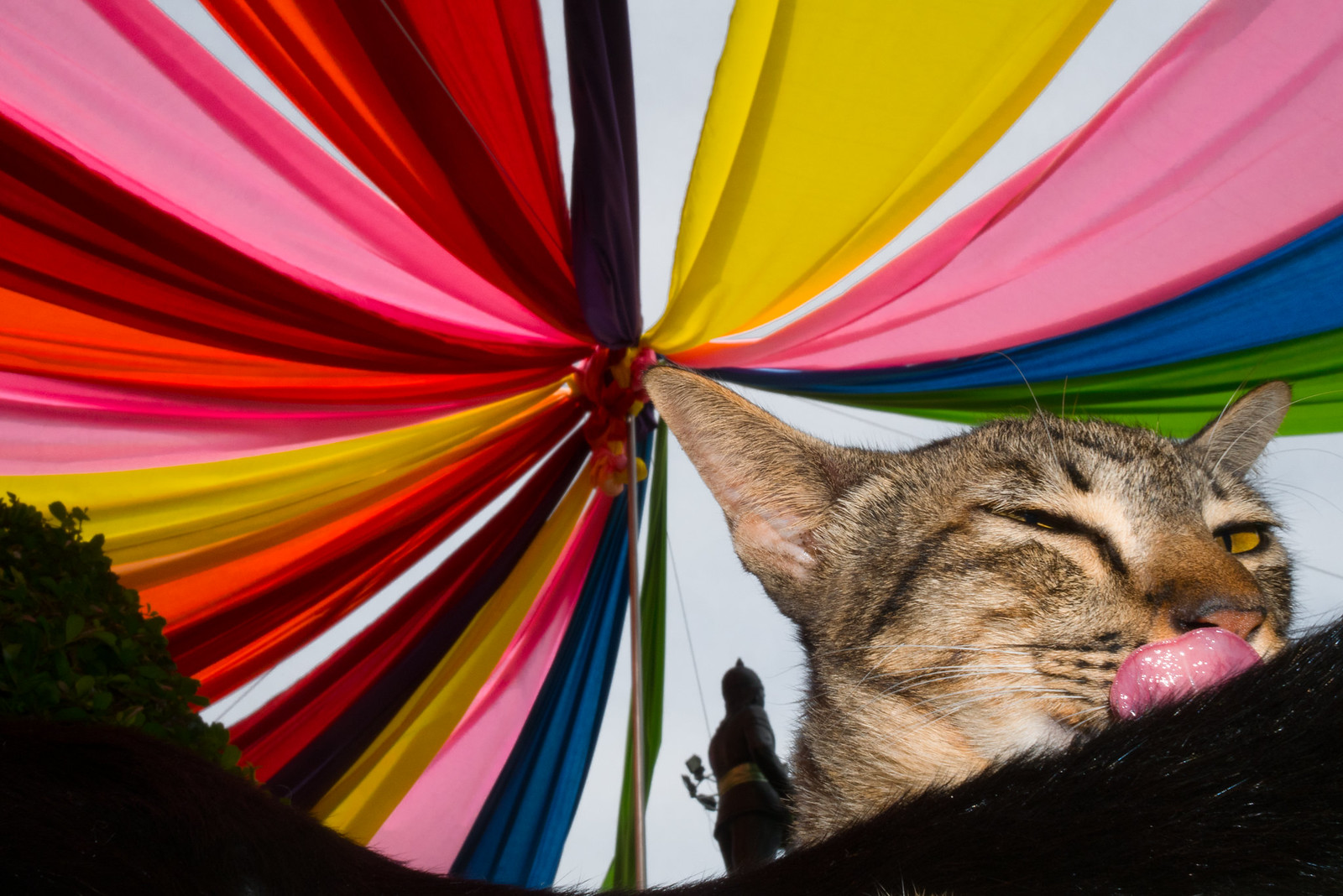 Imposture Cat | by Tawanwad | ตะวันวาด
