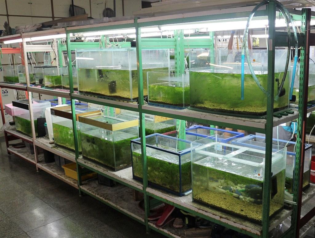 水生走廊擁有將近100個魚缸,作為展示與復育用途。攝影/楊孟軒