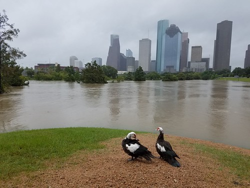 Flooding in Houston, Texas – Photo by Tom Fitzpatrick, FUGRO | by World Meteorological Organization