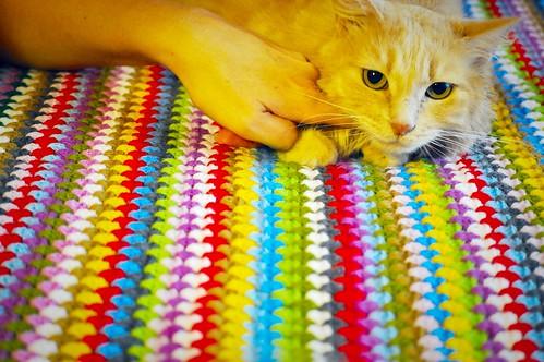 Blondie, gata Angora vainilla tímida y dulce esterilizada, nacida en Abril´13, en adopción. Valencia. ADOPTADA. 37134829731_7a592e9d3d