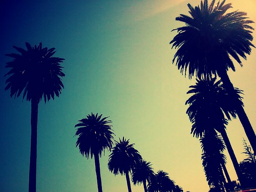 palms | by Laura Shindollar