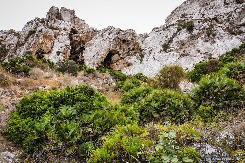 Palmitos en un rincón de la cara norte de la Mesa Roldán
