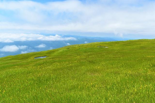 姥ヶ岳の湿原