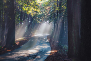 sunbeams on a winding road | by pixelmama