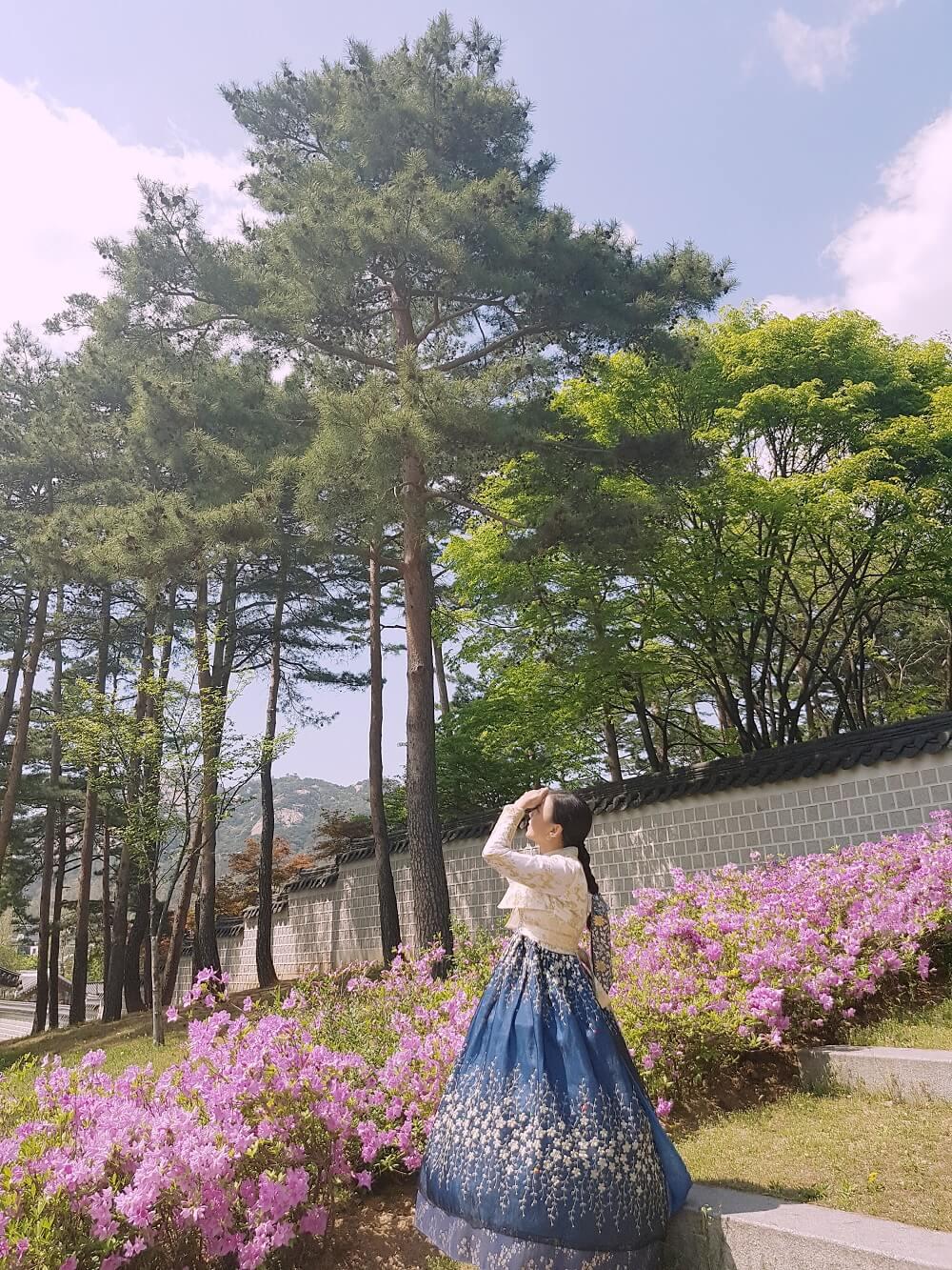 almost summer in gyeongbokgung