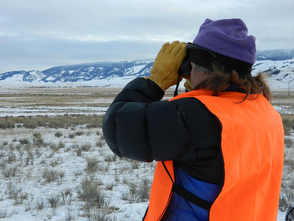 聖誕節數鳥活動(Christmas Bird Count)。圖片來源:USFWS Mountain-Prairie(CC BY 2.0)