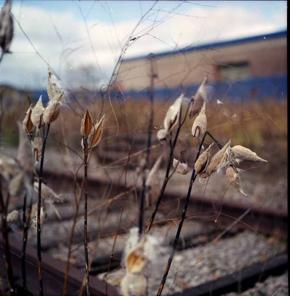 Trackside Cotton | by Beaulawrence