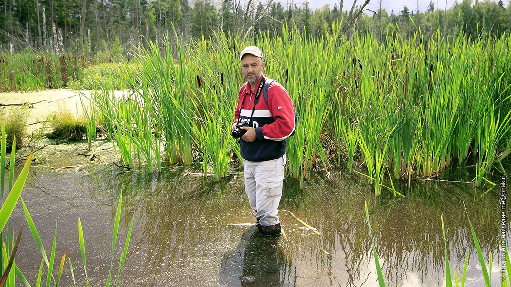 Photo of Maxim Napreenko on lowland bog