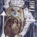 Hoot Owl 7of8