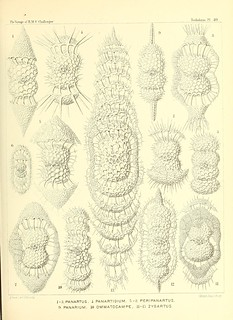 n170_w1150 | by BioDivLibrary