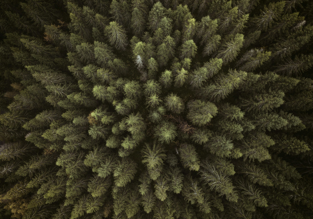 Forest From Above Drone Photography From Forest In