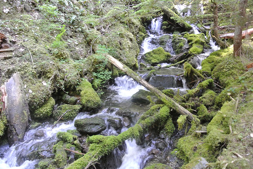 Olympic Mountain Dreams day  3 - Water through the moss | by Spiral Cage