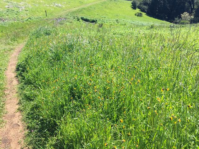 Alder Spring Trail (G)