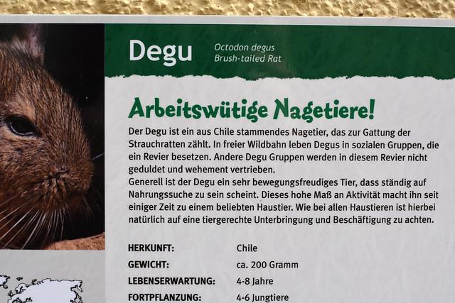 Degus ... Tiergarten Worms ... Foto: Brigitte Stolle, Mannheim