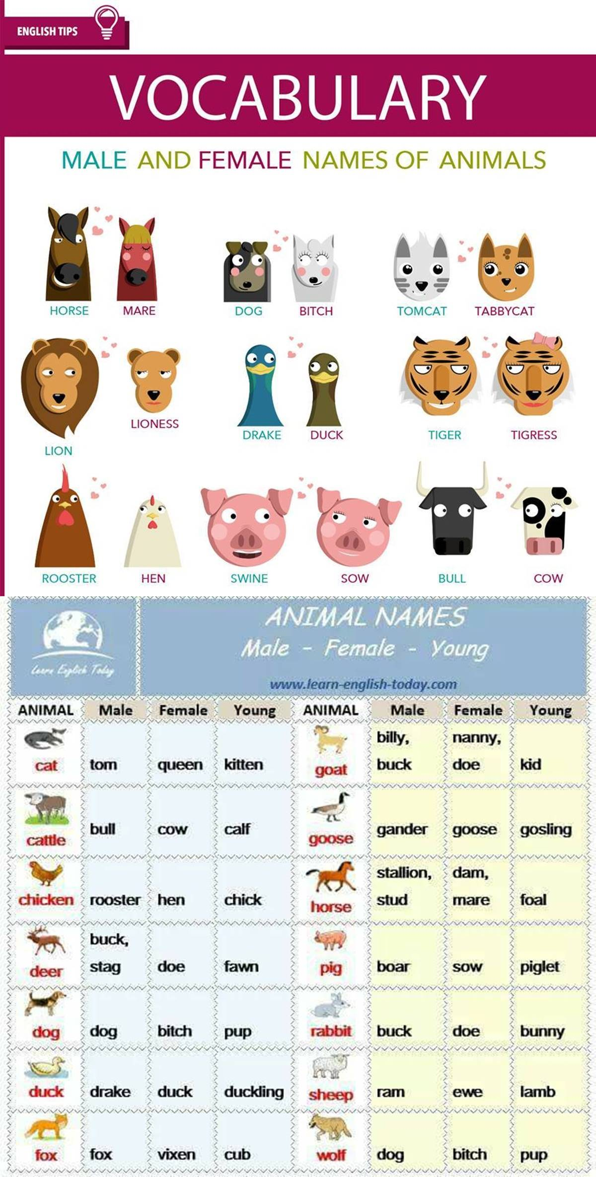 List of Animal Names for Male, Female & Young :) :) 3