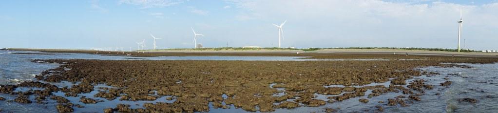 桃園大潭觀塘工業區內之觀塘藻礁。(劉少倫拍攝)